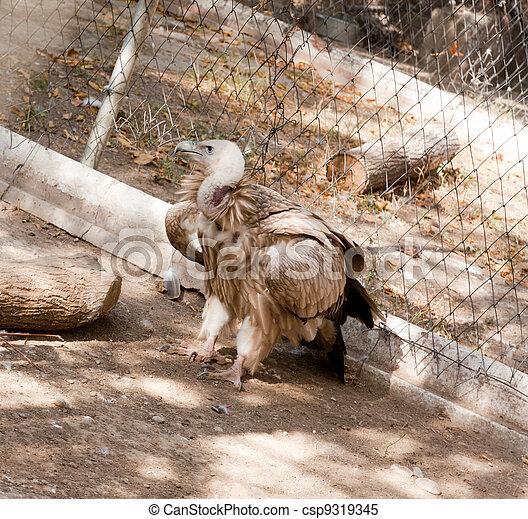 vulture - csp9319345