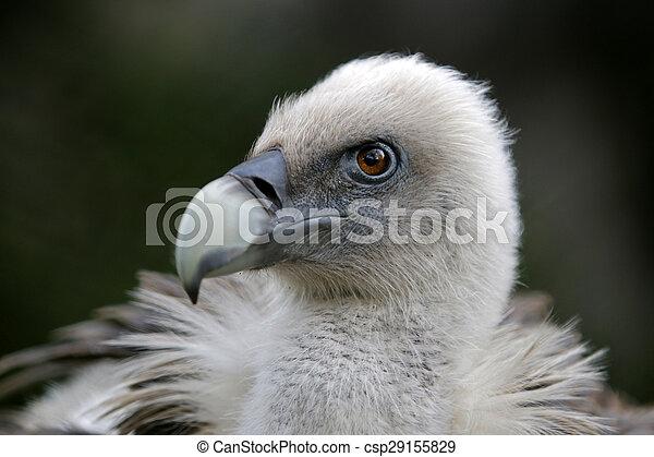 Vulture - csp29155829