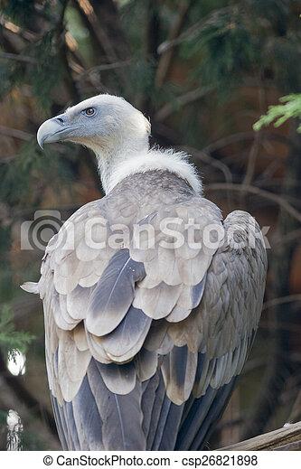 vulture - csp26821898