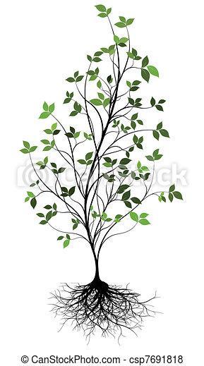 w, 上に, 木, ベクトル, gree, 根 - csp7691818
