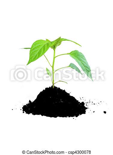 Pflanzengrün und Boden wachsen - csp4300078
