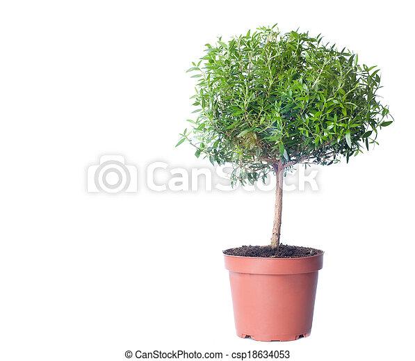Wachsen, hintergrund., kleiner baum, weißes. Baum, hintergrund ...