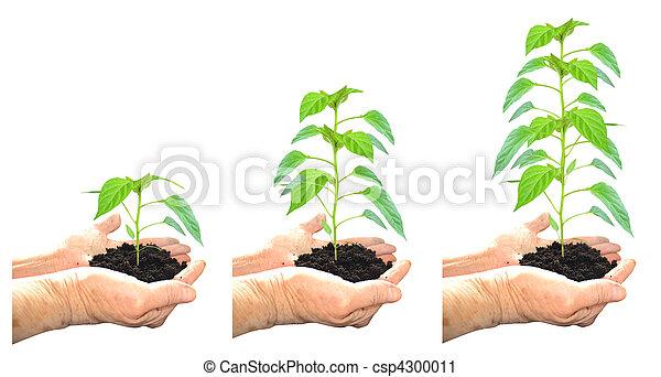 wachsen, pflanze - csp4300011