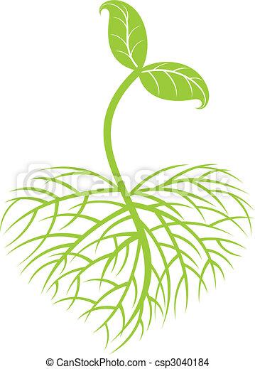 Die Pflanze wächst - csp3040184