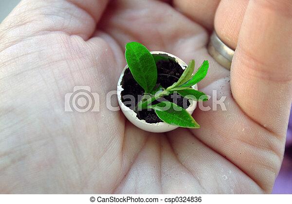 Wachstum - csp0324836