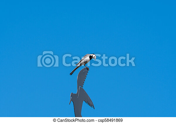 Wagtail on a weathercock - csp58491869