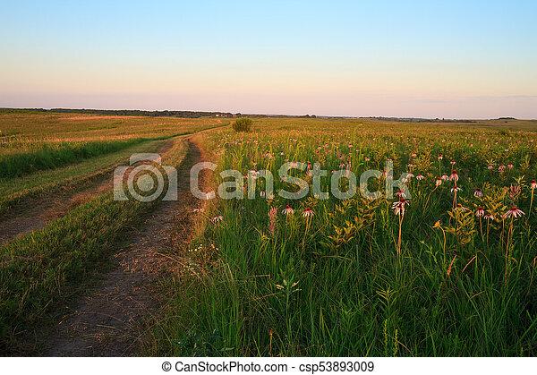 wah'kon-tah, coneflowers, prairie, chemin, pourpre - csp53893009