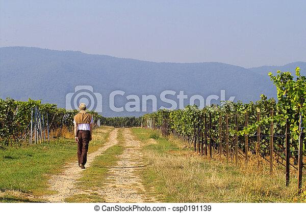 Walk in wineyards - csp0191139