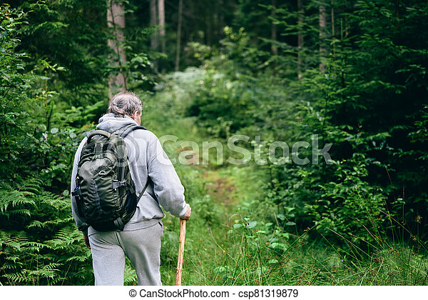 Walking in forest. Back view of man going through the woods - csp81319879