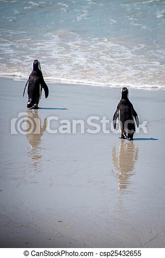 Walking Penguins - csp25432655