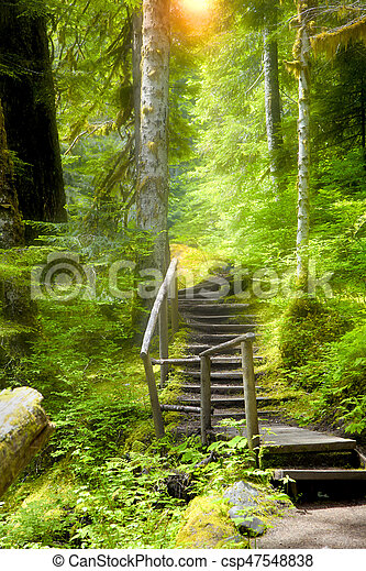 Walking trail in the forest with sun rays - csp47548838