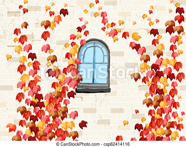 Wall and windows of house covered with red ivy in autumn - csp62414116