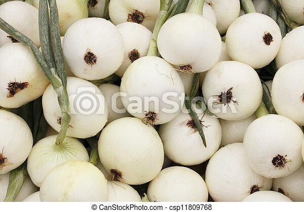 Walla Walla Sweet Onions - csp11809768