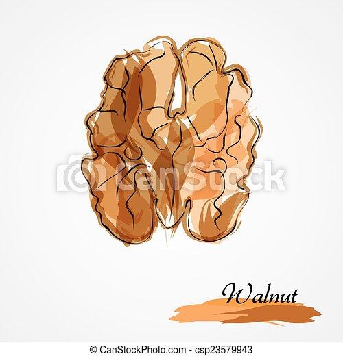 Walnut - csp23579943