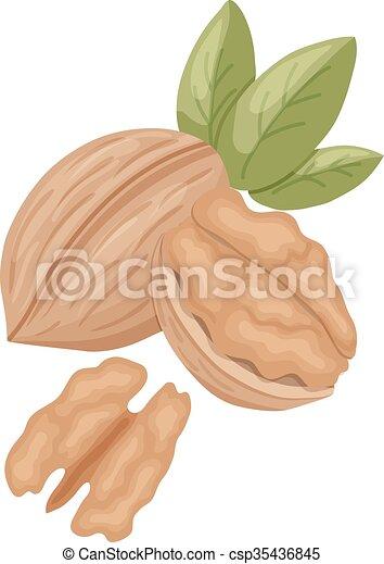 walnut - csp35436845