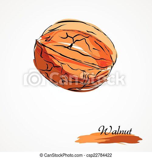 walnut - csp22784422