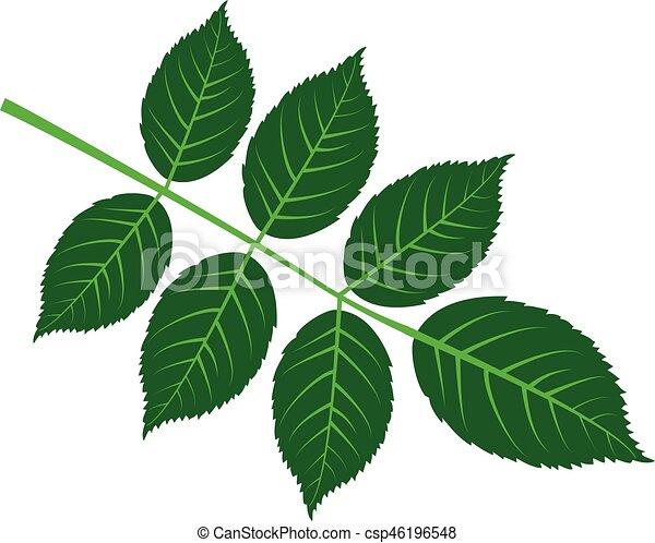 walnut leaf - csp46196548