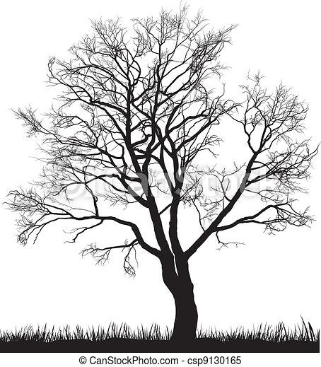 Walnut tree in winter - csp9130165
