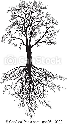 Walnut tree with roots - csp26110990