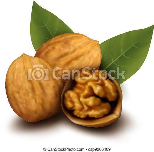 Walnuts and a cracked walnut  Vecto - csp9266409