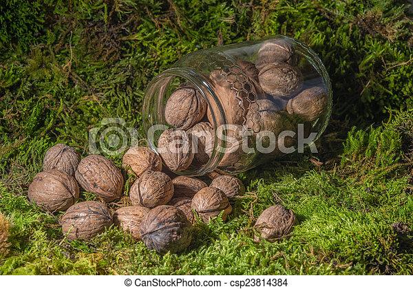 walnuts - csp23814384