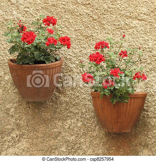 Wand Blumentopfe Europa Wand Italien Toscana Zwei Geranie