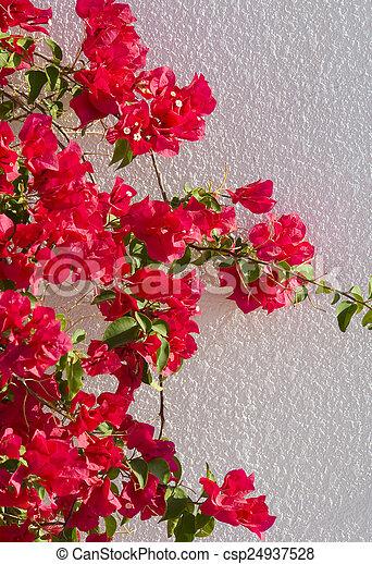 Wand, weisse blumen, rotes . Wand, haus, bäume, groß,... Stockfoto ...