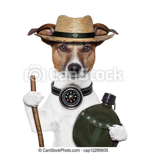 Hike Kompass Hut Hund - csp12289935