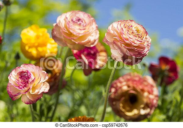 Warm color flowers - csp59742676
