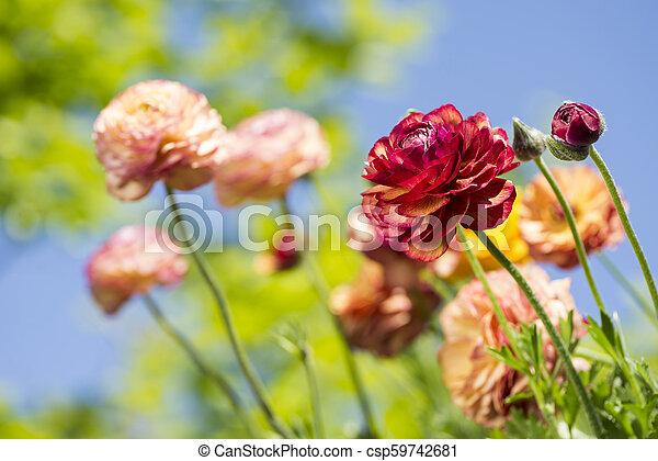 Warm color flowers - csp59742681