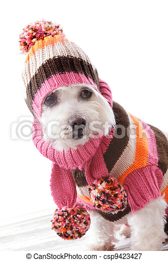 Warm dog wearing knitted beanie and jumper - csp9423427