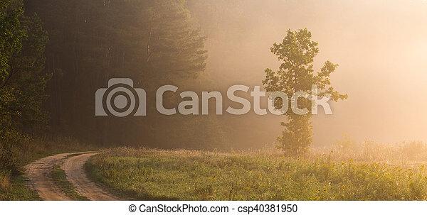 Warm summer morning - csp40381950