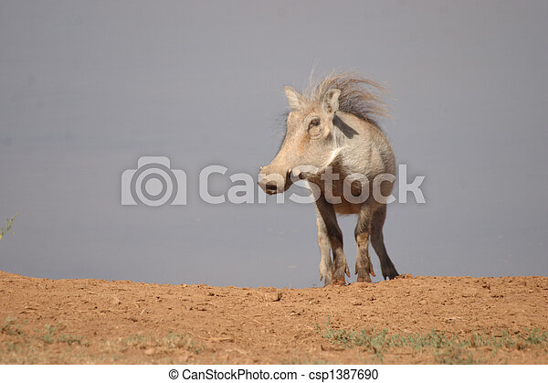 Warthog on top of the World - csp1387690
