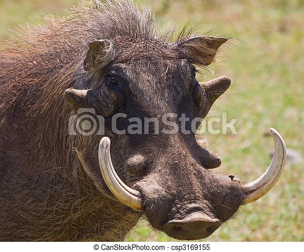 Warthog - csp3169155