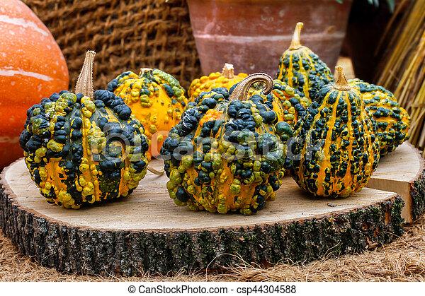 Warty pumpkins on a stump - csp44304588