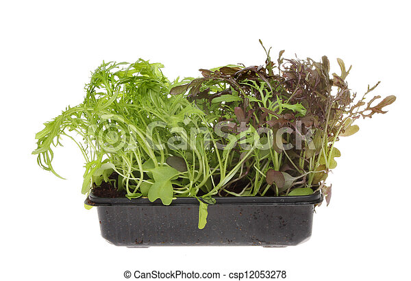 Wasabi leaf salad - csp12053278