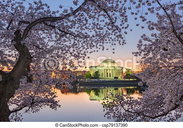 Washington, DC at the Tidal Basin and Jefferson Memorial - csp79137390