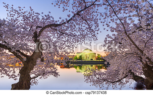 Washington, DC at the Tidal Basin and Jefferson Memorial - csp79137438