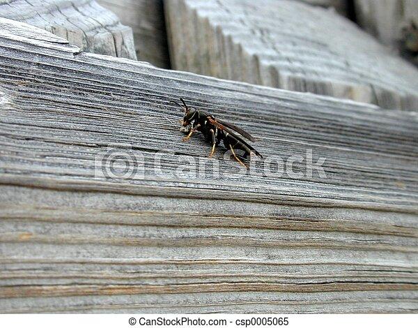 Wasp - csp0005065