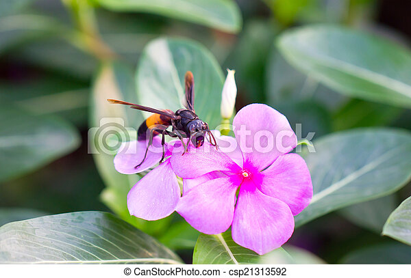 wasp with vinca flowers