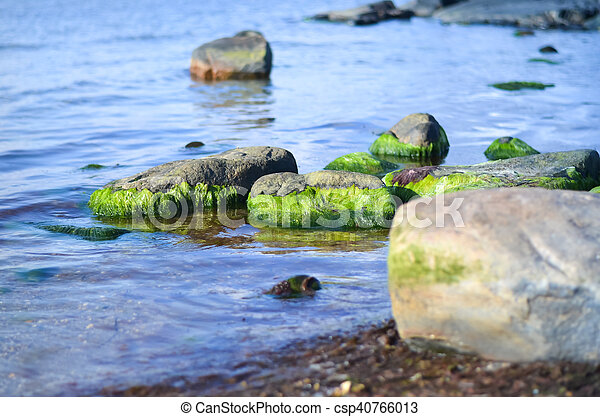 Wasser Bedeckten Grun Algen Steinen Steinen Wasser Grun