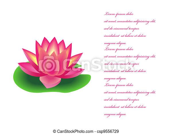 Wasserblume Lilie