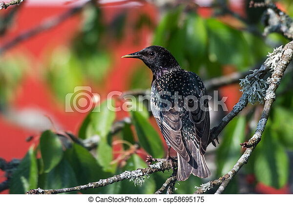Watchful Starling on a branch - csp58695175