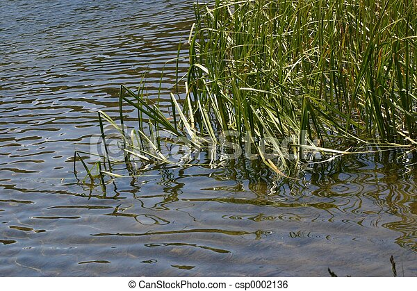 Water and Reeds - csp0002136