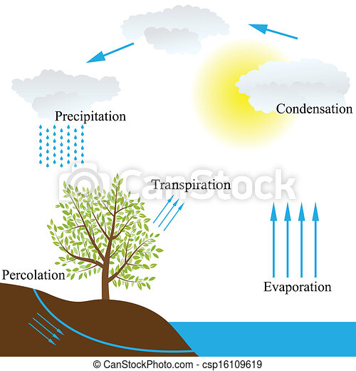 Vector schematic representation of the water cycle in nature water cycle in nature csp16109619 ccuart Image collections