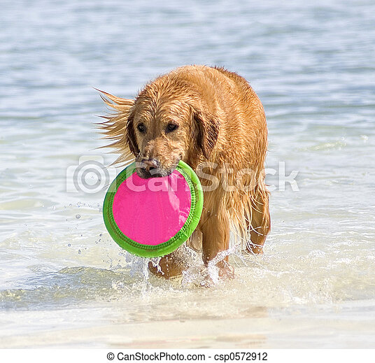 Water dog - csp0572912