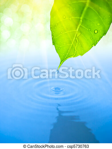 Water drop fall from green leaf with ripple - csp5730763
