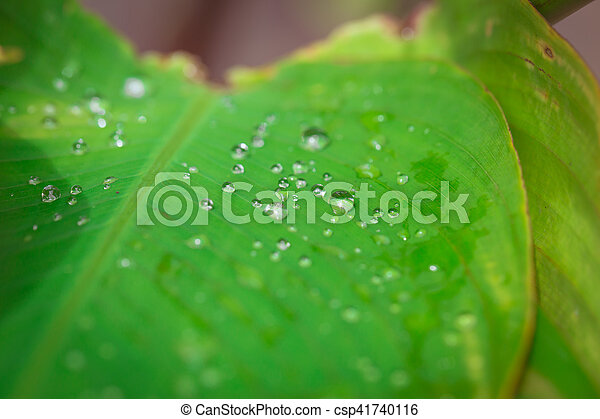 Water Drop on green leaf. - csp41740116