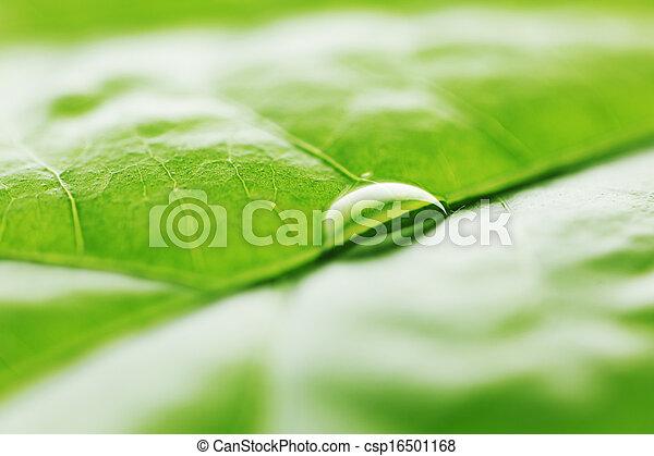 Water drop on green leaf - csp16501168