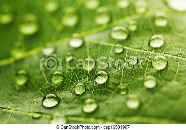 Water drop on green leaf - csp16501967